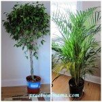 Best indoor plants for air quality
