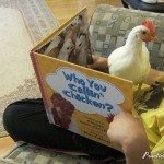 Book Review: Chicken books for children
