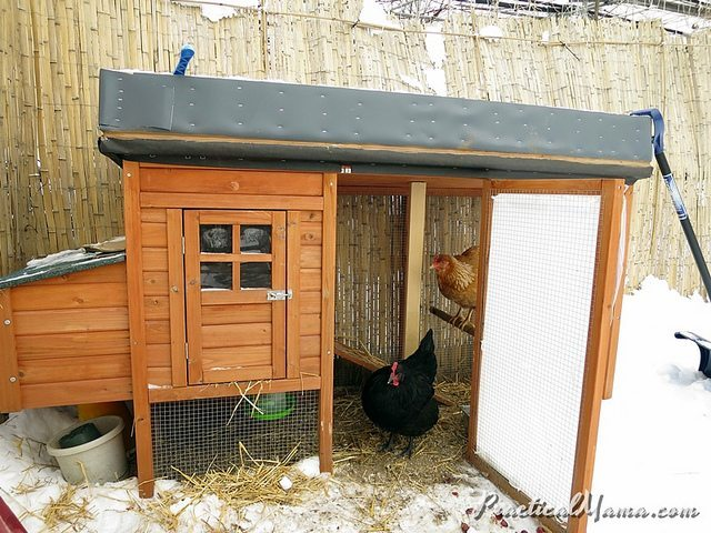 Winterizing Chicken Coop