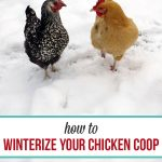 How to winterize your chicken coop