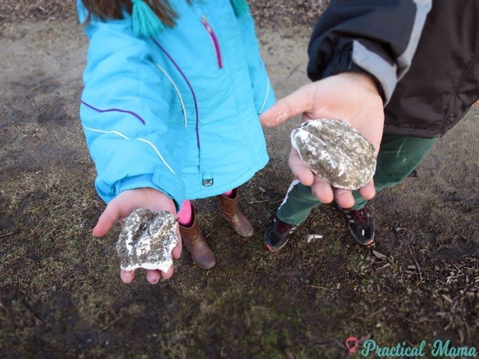 Make plaster casts of animal tracks