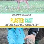 Make Plaster Cast of Animal Tracks
