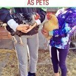 Chickens make great pets